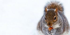 An image of a squirrel feeding.