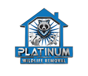 Platinum Squirrel Removal